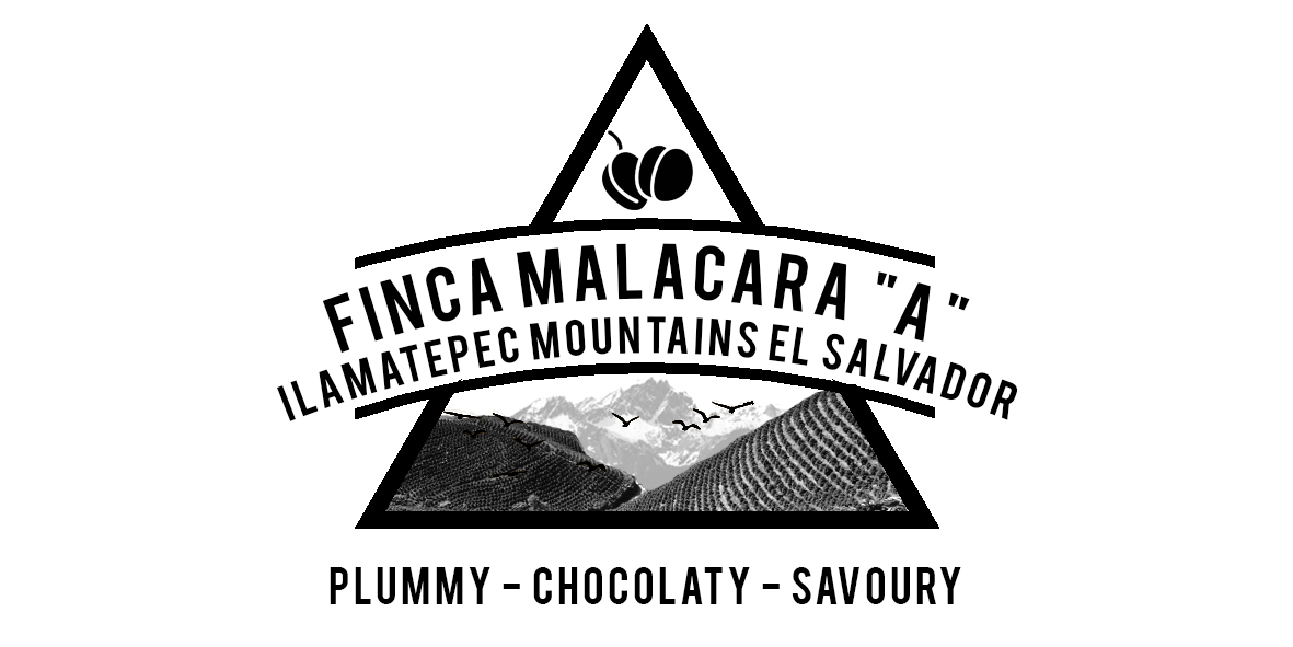 EL SALVADOR FINCA MALACARA A COFFEE FARM