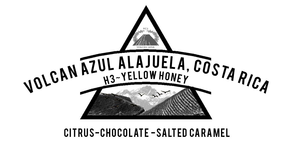 Costa Rica Volcan Azul Yellow Honey H3 Coffee Varietal
