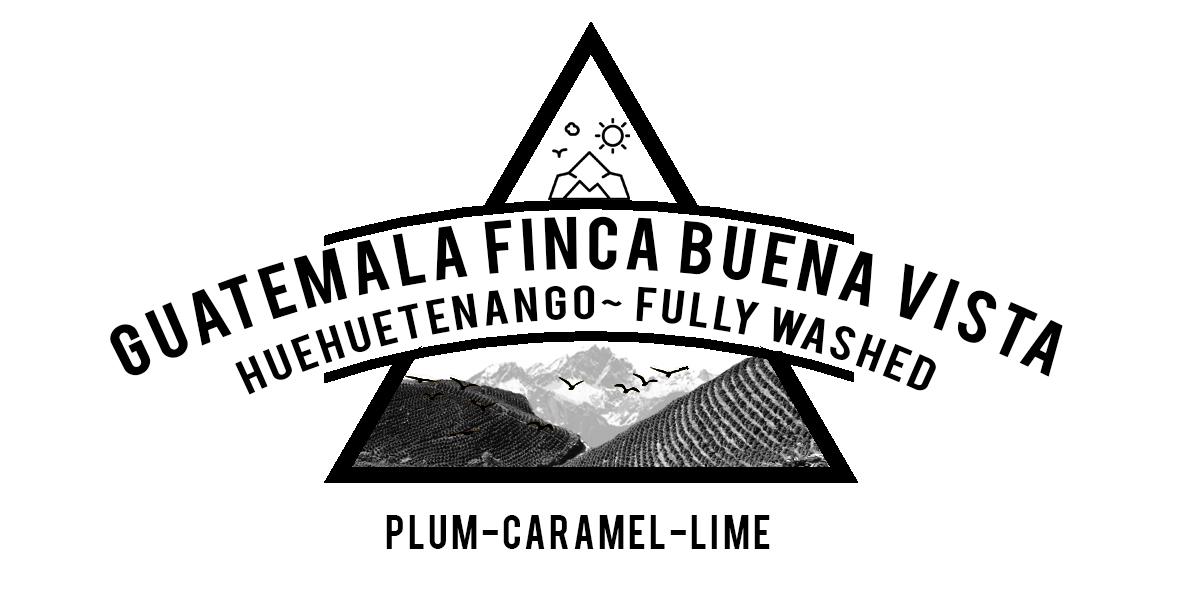 GUATEMALA FINCA BUENA VISTA