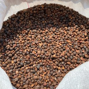 Excelsa Double Fermented Coffee sq