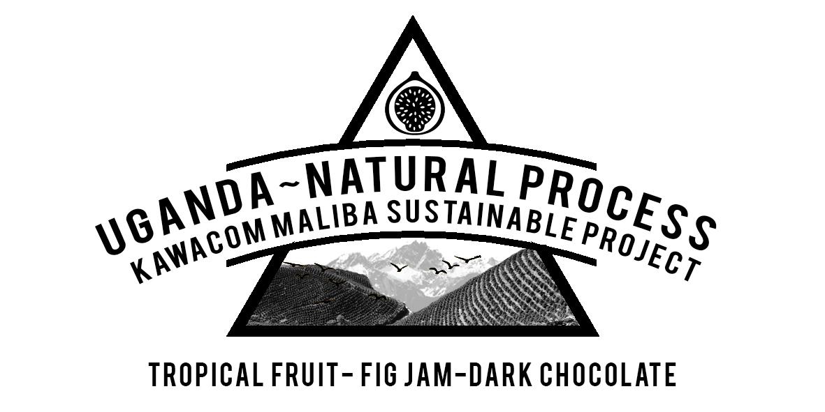 Uganda Maliba Sustainable coffee project