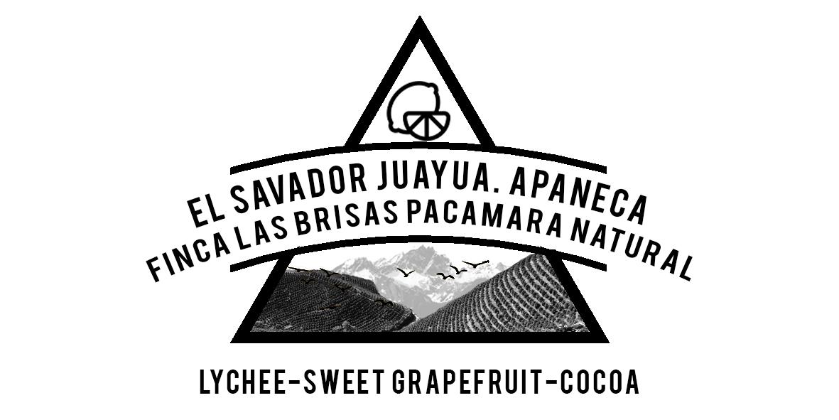 EL SALVADOR FINCA LAS BRISAS