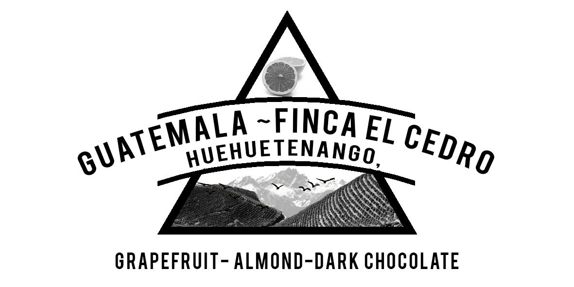 GUATEMALA FINCA EL CEDRO