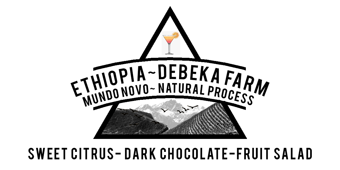 ETHIOPIAN DEBEKA FARM